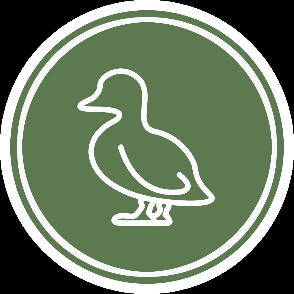 myDuck Marketing Logo